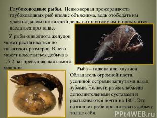 Глубоководные рыбы. Неимоверная прожорливость глубоководных рыб вполне объяснима
