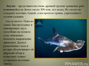 Акулы – представители очень древней группы хрящевых рыб, появившейся на Земле ок