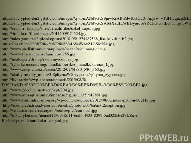 https://encrypted-tbn2.gstatic.com/images?q=tbn:ANd9GcS9jnwRsARi8dwlbGCU3h-ipjSw_vTdFFuquzp2eB38NPx9tkCb https://encrypted-tbn3.gstatic.com/images?q=tbn:ANd9GcSAI6tXzEILWBDyueJb8sRCkGtwvtEc6Or1gobWwAuBS6VJ6h3x http://сезоны-года.рф/sites/default/fil…