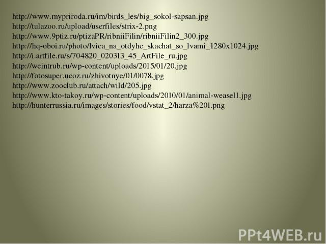 http://www.mypriroda.ru/im/birds_les/big_sokol-sapsan.jpg http://tulazoo.ru/upload/userfiles/strix-2.png http://www.9ptiz.ru/ptizaPR/ribniiFilin/ribniiFilin2_300.jpg http://hq-oboi.ru/photo/lvica_na_otdyhe_skachat_so_lvami_1280x1024.jpg http://i.art…