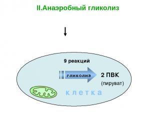 Глюкоза Полисахариды 2 ПВК II.Анаэробный гликолиз – бескислородный этап к л е т