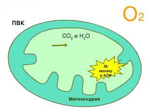 О2 Митохондрия ПВК СО2 и Н2О 36 молекул АТФ Аэробный этап