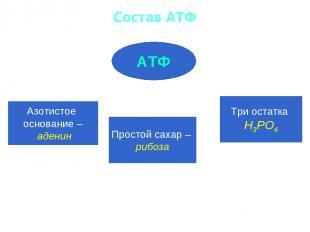 Состав АТФ АТФ Азотистое основание – аденин Простой сахар – рибоза Три остатка Н