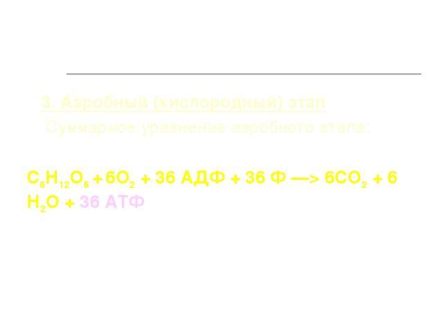 3. Аэробный (кислородный) этап Суммарное уравнение аэробного этапа: С6Н12О6 + 6О2 + 36 АДФ + 36 Ф —> 6СО2 + 6 Н2О + 36 АТФ