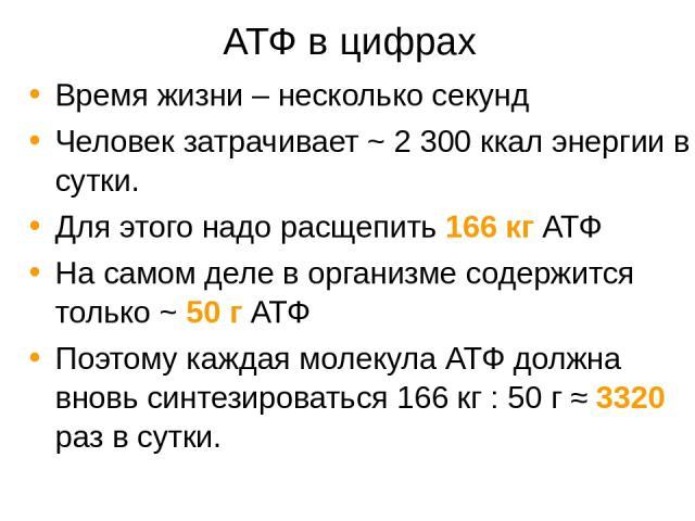 АТФ в цифрах Время жизни – несколько секунд Человек затрачивает ~ 2 300 ккал энергии в сутки. Для этого надо расщепить 166 кг АТФ На самом деле в организме содержится только ~ 50 г АТФ Поэтому каждая молекула АТФ должна вновь синтезироваться 166 кг …