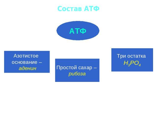 Состав АТФ АТФ Азотистое основание – аденин Простой сахар – рибоза Три остатка Н3РО4